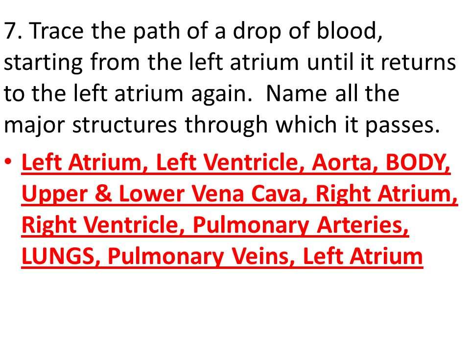 7. Trace the path of a drop of blood, starting from the left atrium until it returns to the left atrium again. Name all the major structures through w