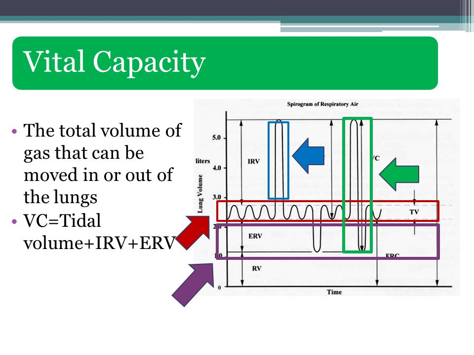 Vital Capacity The total volume of gas that can be moved in or out of the lungs VC=Tidal volume+IRV+ERV