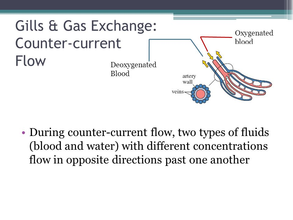 Gills & Gas Exchange: Counter-current Flow During counter-current flow, two types of fluids (blood and water) with different concentrations flow in op