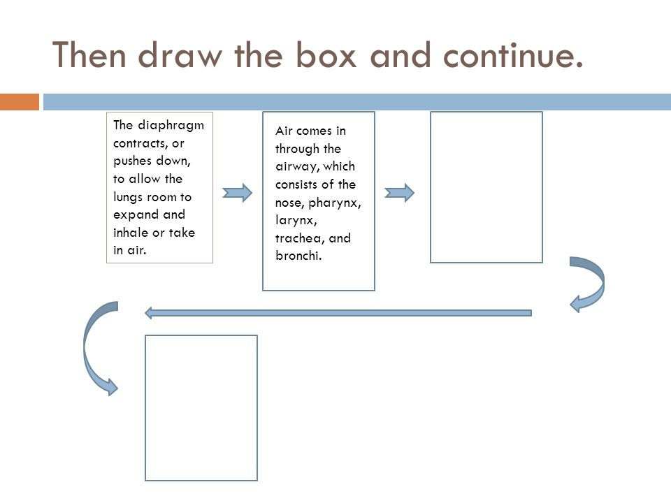 The diaphragm contracts, or pushes down, to allow the lungs room to expand and inhale or take in air. Then draw the box and continue. Air comes in thr