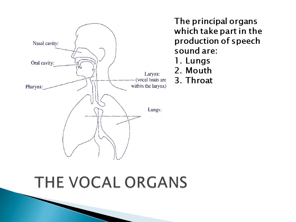 THE VOCAL ORGANS The principal organs which take part in the production of speech sound are: 1.Lungs 2.Mouth 3.Throat