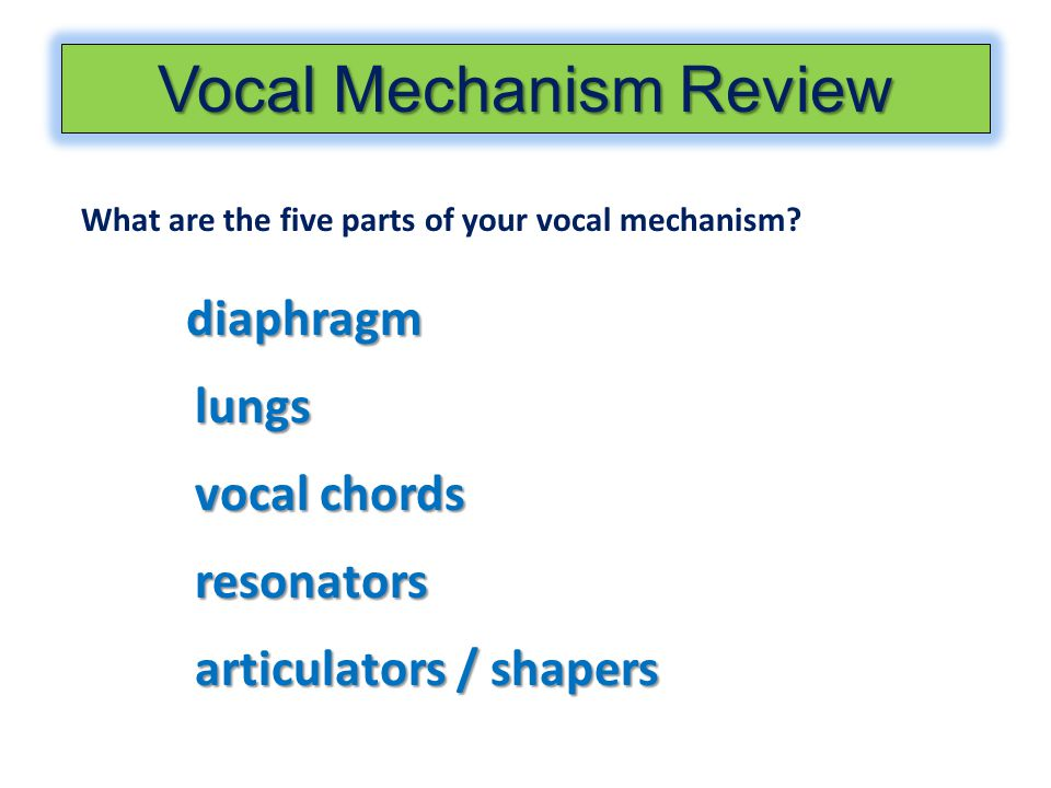Vocal Mechanism Review What are the five parts of your vocal mechanism? diaphragm lungs vocal chords resonators articulators / shapers