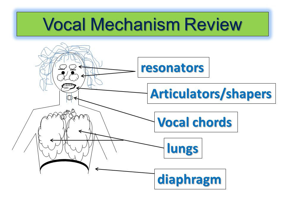 diaphragm lungs Vocal chords Articulators/shapers resonators