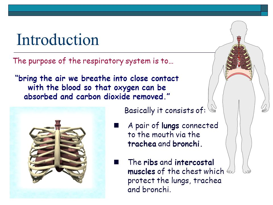 "Introduction The purpose of the respiratory system is to… ""bring the air we breathe into close contact with the blood so that oxygen can be absorbed a"