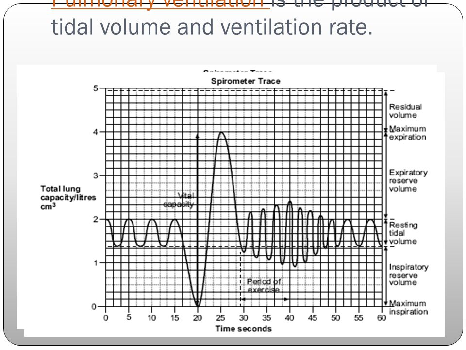 Pulmonary ventilation Pulmonary ventilation is the product of tidal volume and ventilation rate.