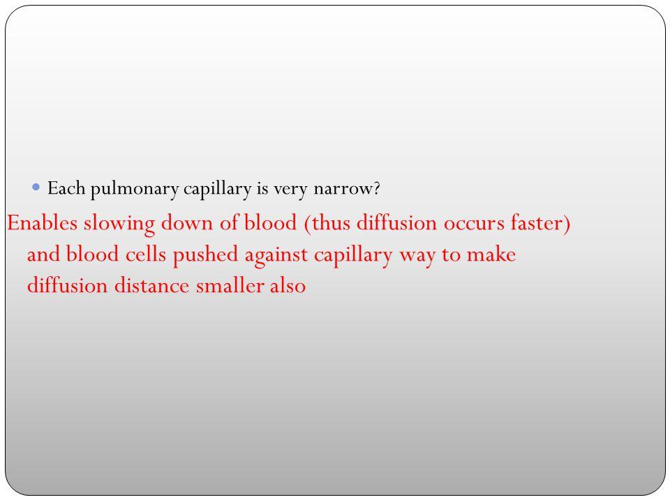 Each pulmonary capillary is very narrow.