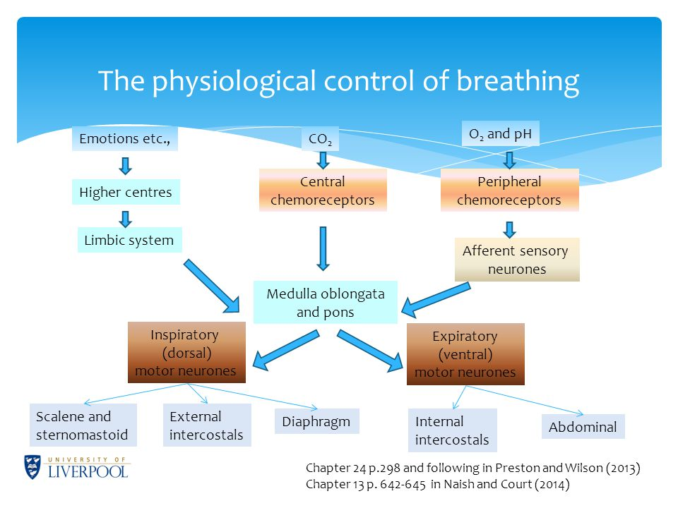 The physiological control of breathing Emotions etc.,CO 2 O 2 and pH Higher centres Limbic system Medulla oblongata and pons Central chemoreceptors Peripheral chemoreceptors Afferent sensory neurones Inspiratory (dorsal) motor neurones Expiratory (ventral) motor neurones Scalene and sternomastoid External intercostals DiaphragmInternal intercostals Abdominal Chapter 24 p.298 and following in Preston and Wilson (2013) Chapter 13 p.