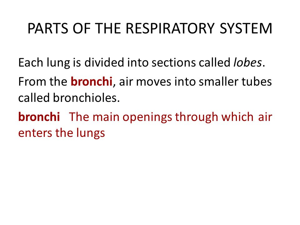 PARTS OF THE RESPIRATORY SYSTEM Bronchioles are divided into smaller spaces called alveoli.