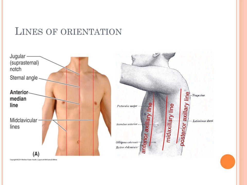 L INES OF ORIENTATION