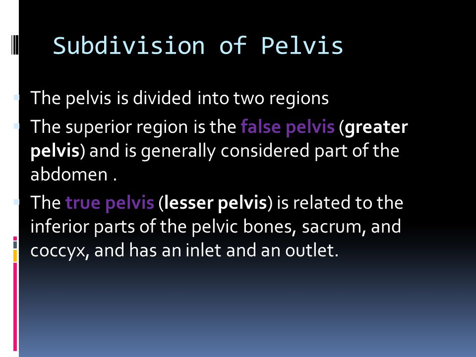 Subdivision of Pelvis  The pelvis is divided into two regions  The superior region is the false pelvis (greater pelvis) and is generally considered