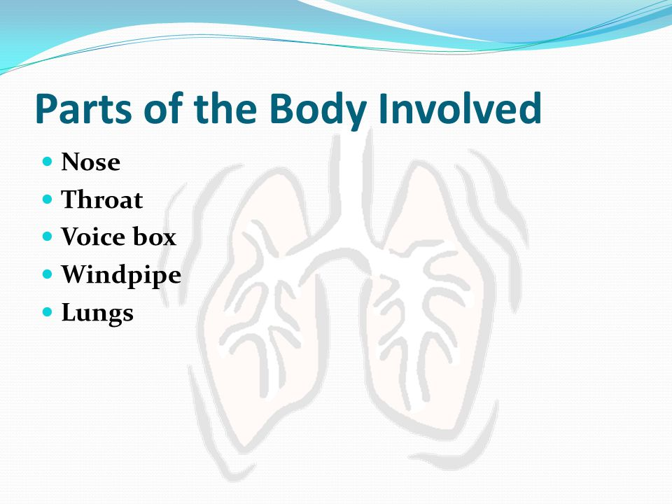 Parts of the Body Involved Nose Throat Voice box Windpipe Lungs