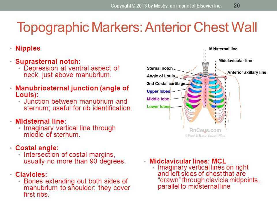 Topographic Markers: Anterior Chest Wall Nipples Suprasternal notch: Depression at ventral aspect of neck, just above manubrium. Manubriosternal junct