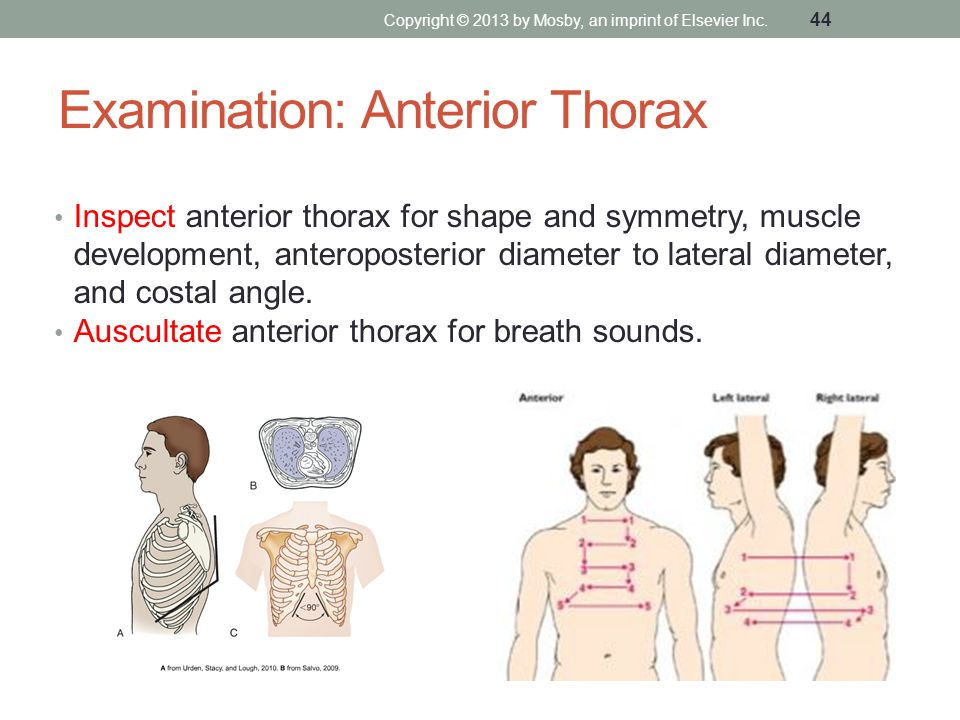 Examination: Anterior Thorax Inspect anterior thorax for shape and symmetry, muscle development, anteroposterior diameter to lateral diameter, and cos