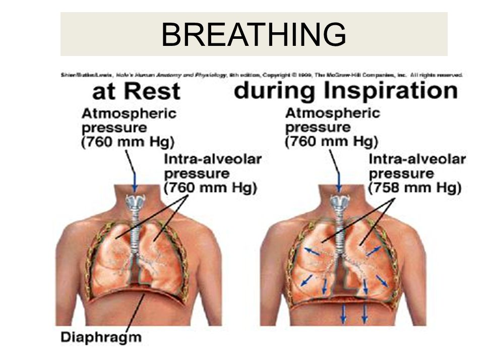 Breathing out - exhaling Rib cage – contracts Diaphragm – moves upward / inward Pressure – increases inside lung Result – air is pushed out of the lung
