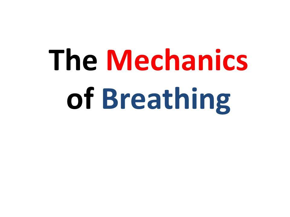 http://www.youtube.com/watch?v=HiT621PrrO0 Respiration Video