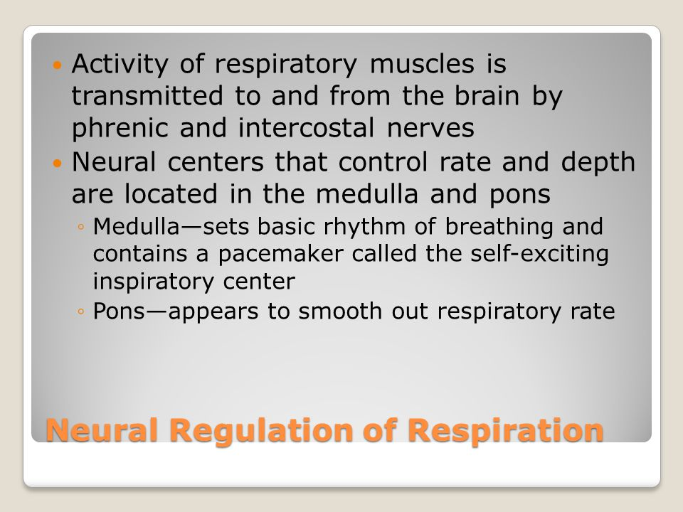 Neural Regulation of Respiration Activity of respiratory muscles is transmitted to and from the brain by phrenic and intercostal nerves Neural centers