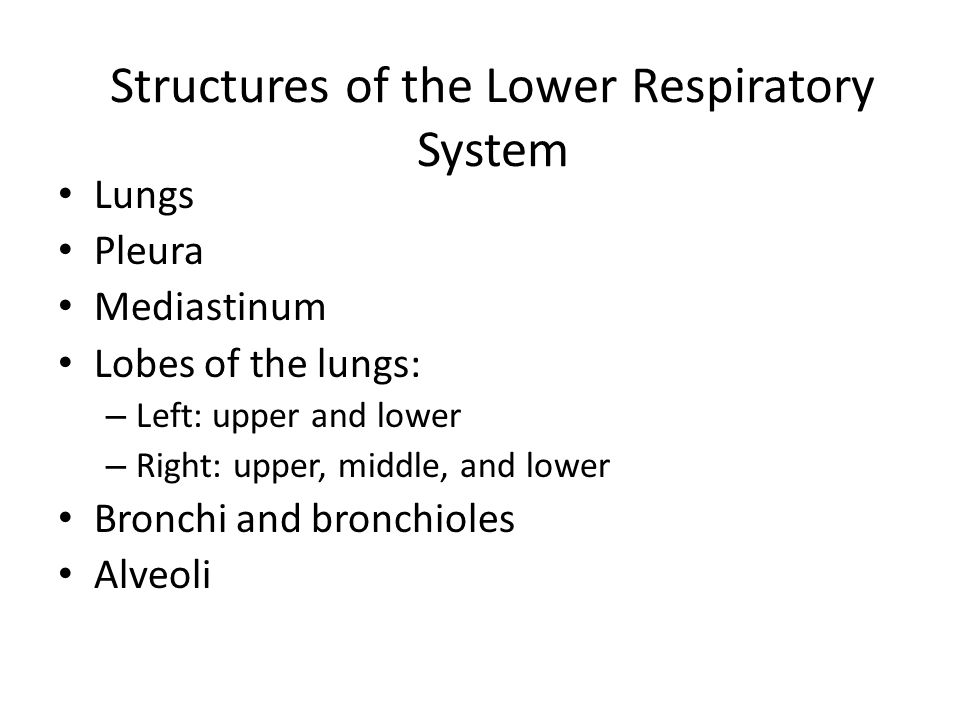 Structures of the Lower Respiratory System Lungs Pleura Mediastinum Lobes of the lungs: – Left: upper and lower – Right: upper, middle, and lower Bronchi and bronchioles Alveoli