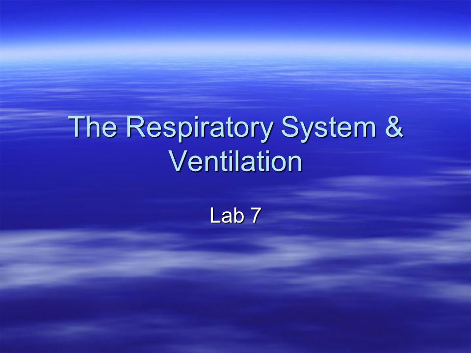 The Respiratory System & Ventilation Lab 7