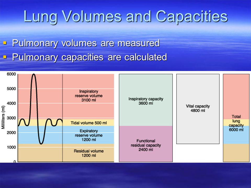 Lung Volumes and Capacities  Pulmonary volumes are measured  Pulmonary capacities are calculated