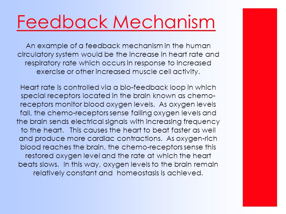 Feedback Mechanism An example of a feedback mechanism in the human circulatory system would be the increase in heart rate and respiratory rate which o
