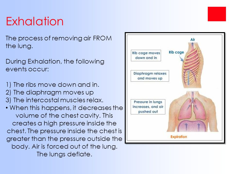Exhalation The process of removing air FROM the lung. During Exhalation, the following events occur: 1) The ribs move down and in. 2) The diaphragm mo