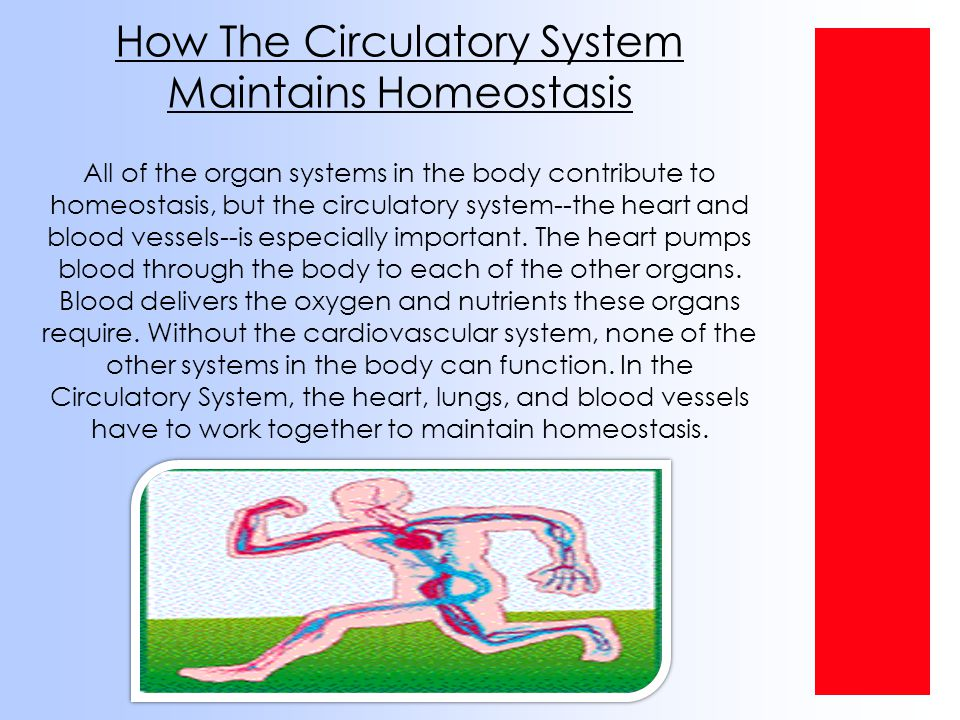 What Is The Respiratory System.