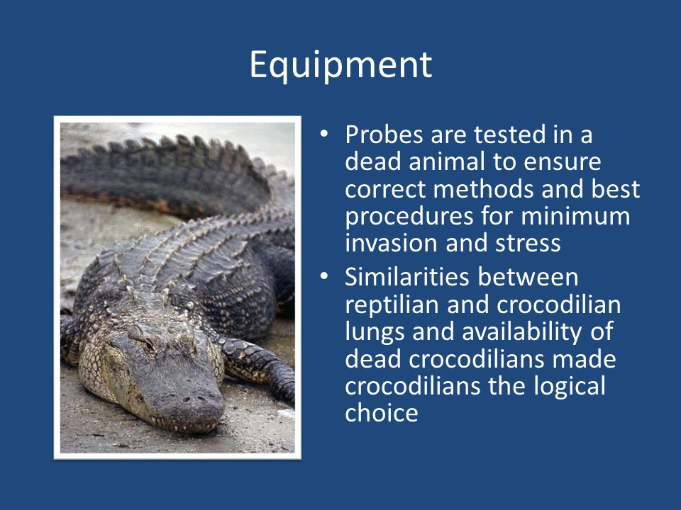 Equipment Probes are tested in a dead animal to ensure correct methods and best procedures for minimum invasion and stress Similarities between reptil