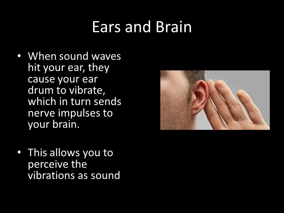 Ears and Brain When sound waves hit your ear, they cause your ear drum to vibrate, which in turn sends nerve impulses to your brain.
