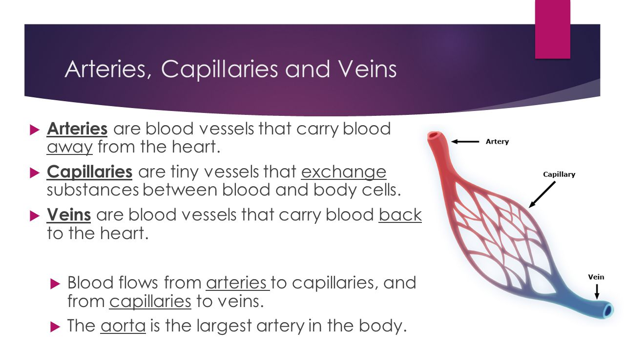 Arteries, Capillaries and Veins  Arteries are blood vessels that carry blood away from the heart.  Capillaries are tiny vessels that exchange substa
