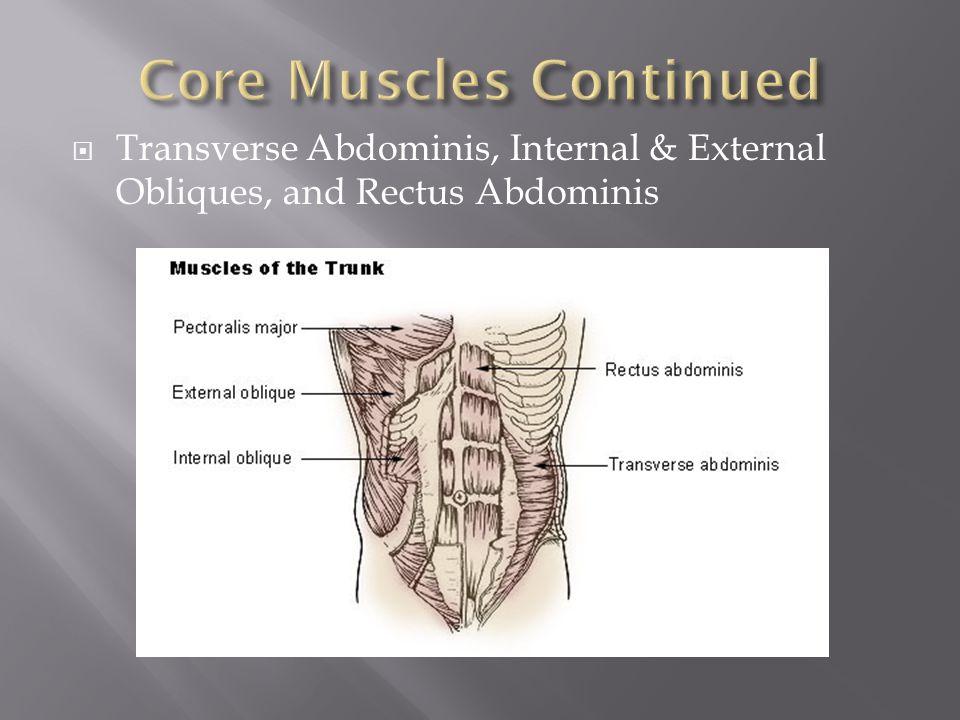  Transverse Abdominis, Internal & External Obliques, and Rectus Abdominis