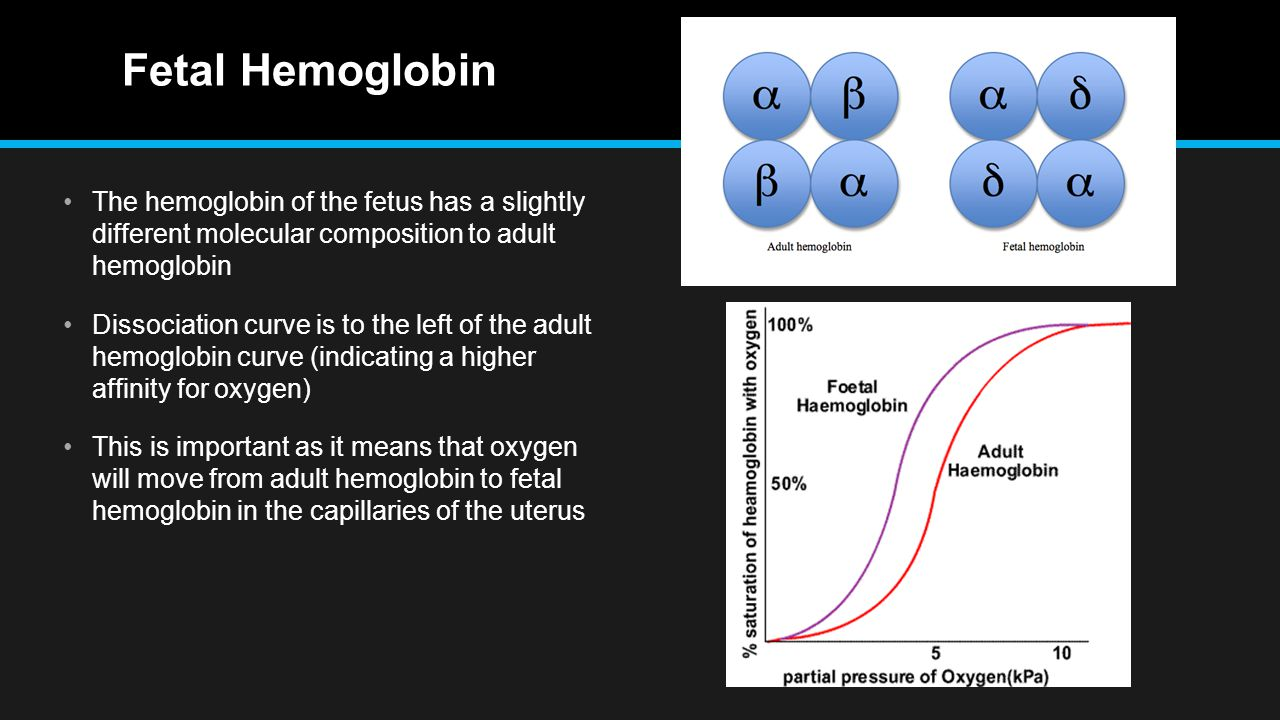 Fetal Hemoglobin The hemoglobin of the fetus has a slightly different molecular composition to adult hemoglobin Dissociation curve is to the left of the adult hemoglobin curve (indicating a higher affinity for oxygen) This is important as it means that oxygen will move from adult hemoglobin to fetal hemoglobin in the capillaries of the uterus