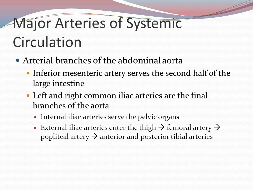 Major Arteries of Systemic Circulation Arterial branches of the abdominal aorta Inferior mesenteric artery serves the second half of the large intesti
