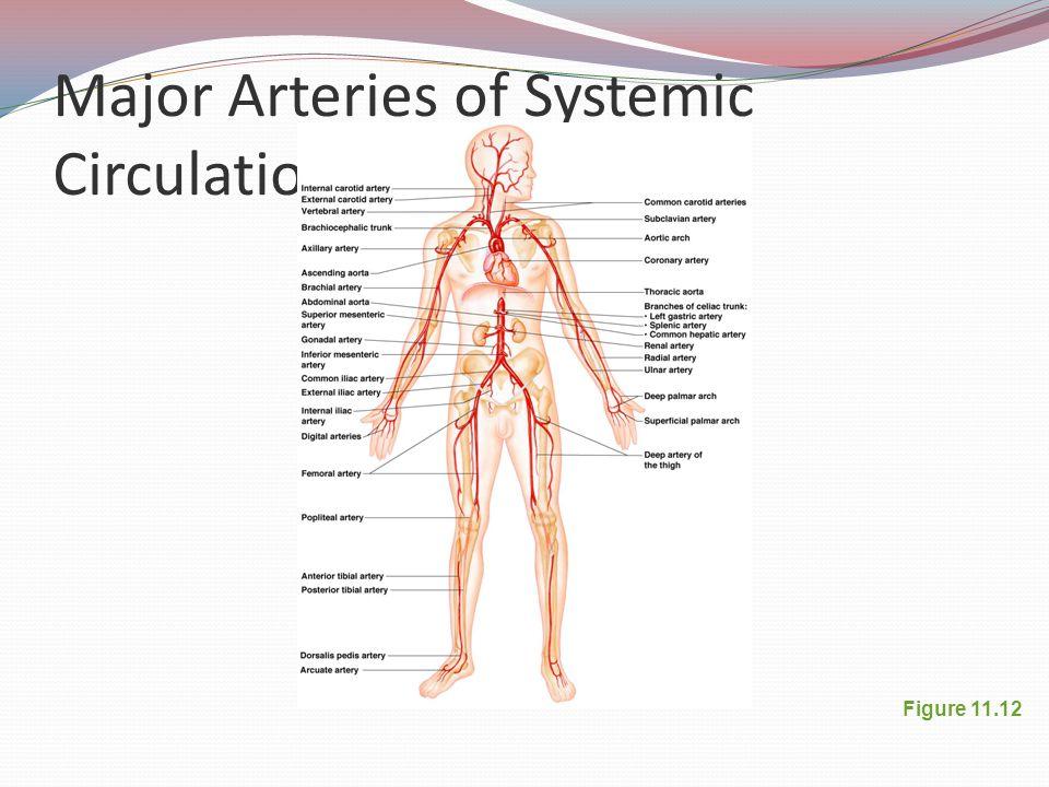 Major Arteries of Systemic Circulation Figure 11.12