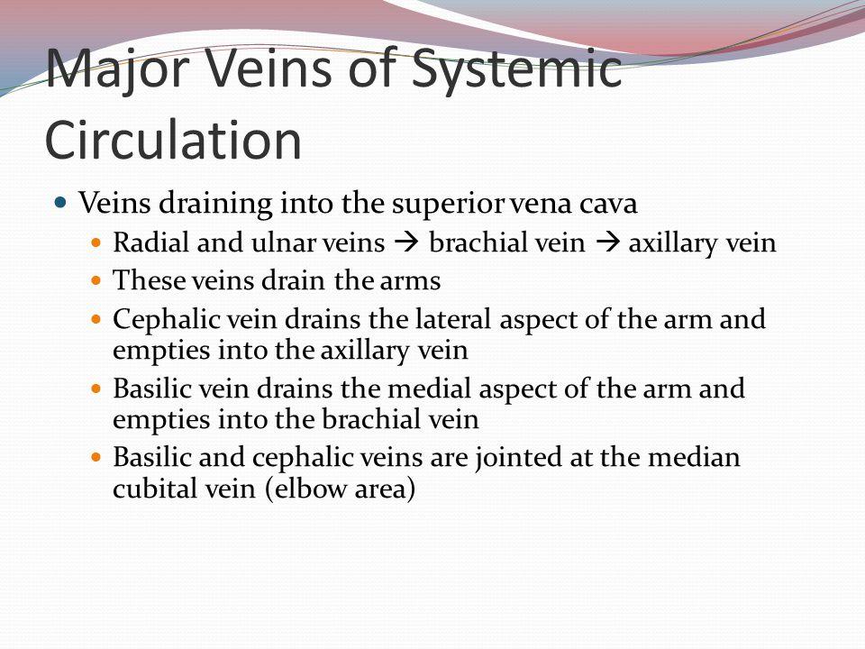 Major Veins of Systemic Circulation Veins draining into the superior vena cava Radial and ulnar veins  brachial vein  axillary vein These veins drai