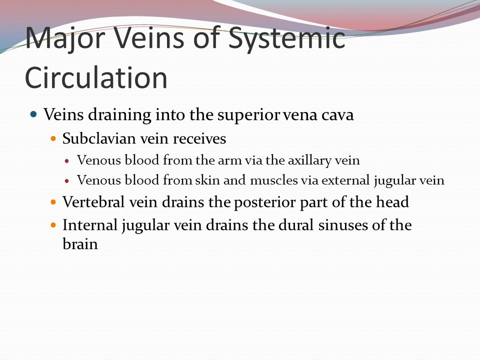 Major Veins of Systemic Circulation Veins draining into the superior vena cava Subclavian vein receives Venous blood from the arm via the axillary vei