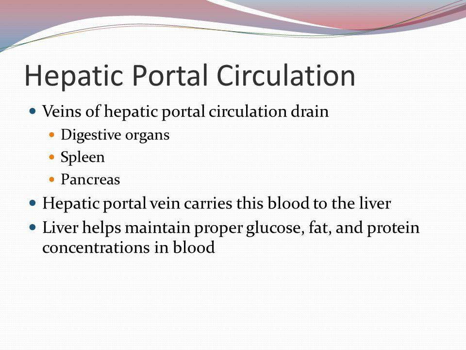Hepatic Portal Circulation Veins of hepatic portal circulation drain Digestive organs Spleen Pancreas Hepatic portal vein carries this blood to the li