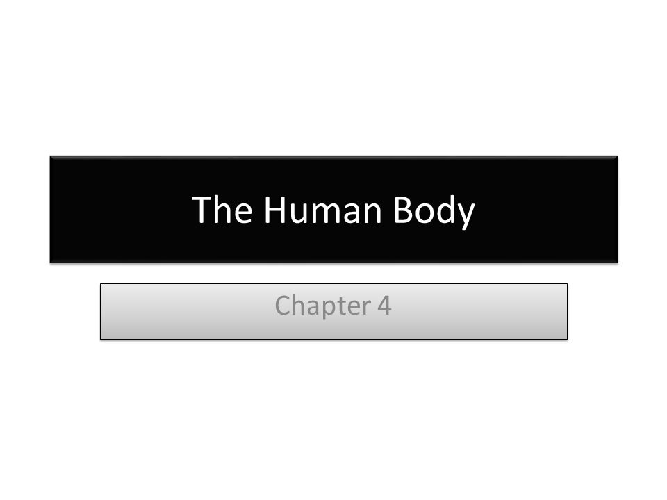 The Human Body Chapter 4