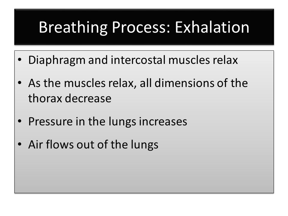 Breathing Process: Exhalation Diaphragm and intercostal muscles relax As the muscles relax, all dimensions of the thorax decrease Pressure in the lungs increases Air flows out of the lungs Diaphragm and intercostal muscles relax As the muscles relax, all dimensions of the thorax decrease Pressure in the lungs increases Air flows out of the lungs