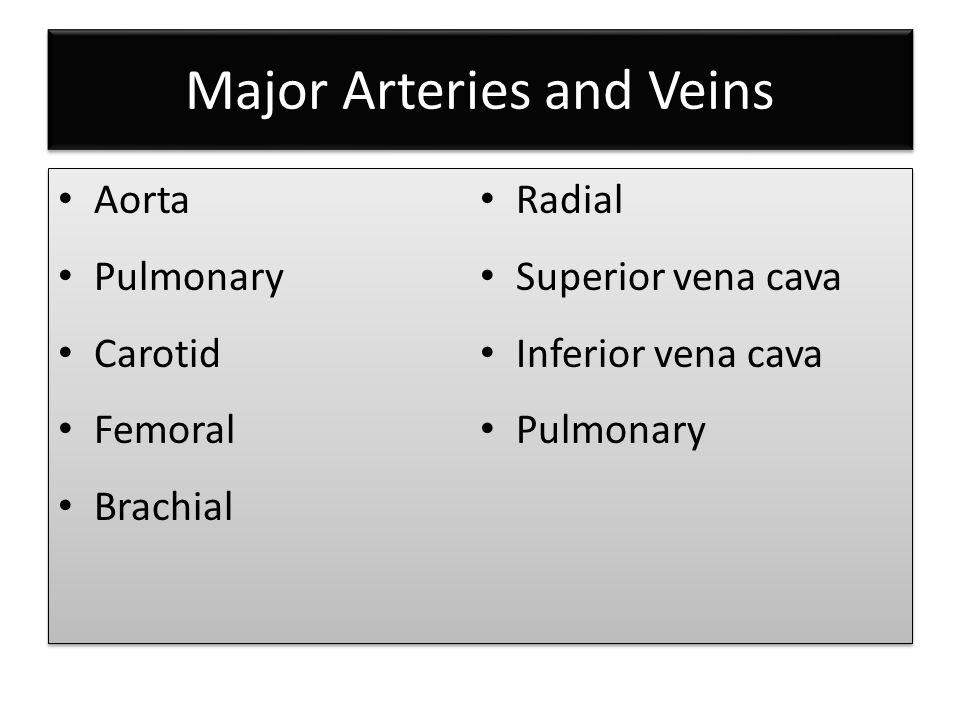 Major Arteries and Veins Aorta Pulmonary Carotid Femoral Brachial Radial Superior vena cava Inferior vena cava Pulmonary Aorta Pulmonary Carotid Femoral Brachial Radial Superior vena cava Inferior vena cava Pulmonary