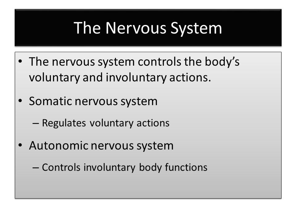 The Nervous System The nervous system controls the body's voluntary and involuntary actions.