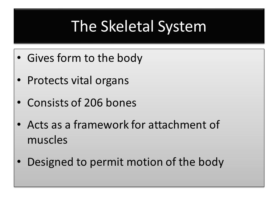 Functions of the Musculoskeletal System Gives the body shape Protects internal organs Provides for movement Consists of more than 600 muscles Gives the body shape Protects internal organs Provides for movement Consists of more than 600 muscles