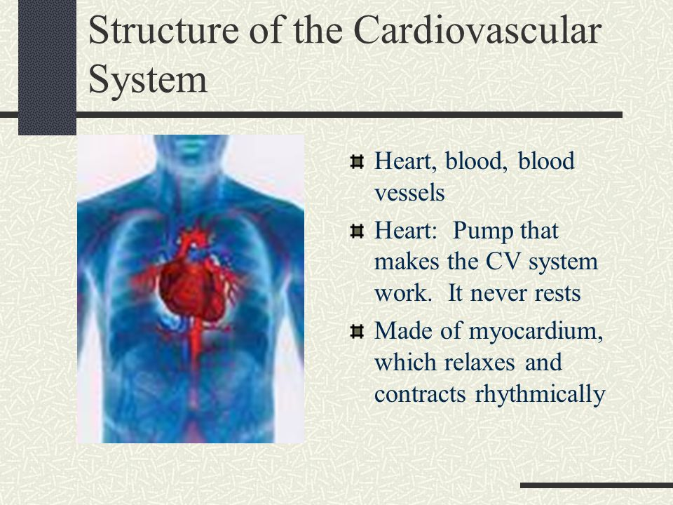 Structure of the Cardiovascular System Heart, blood, blood vessels Heart: Pump that makes the CV system work. It never rests Made of myocardium, which