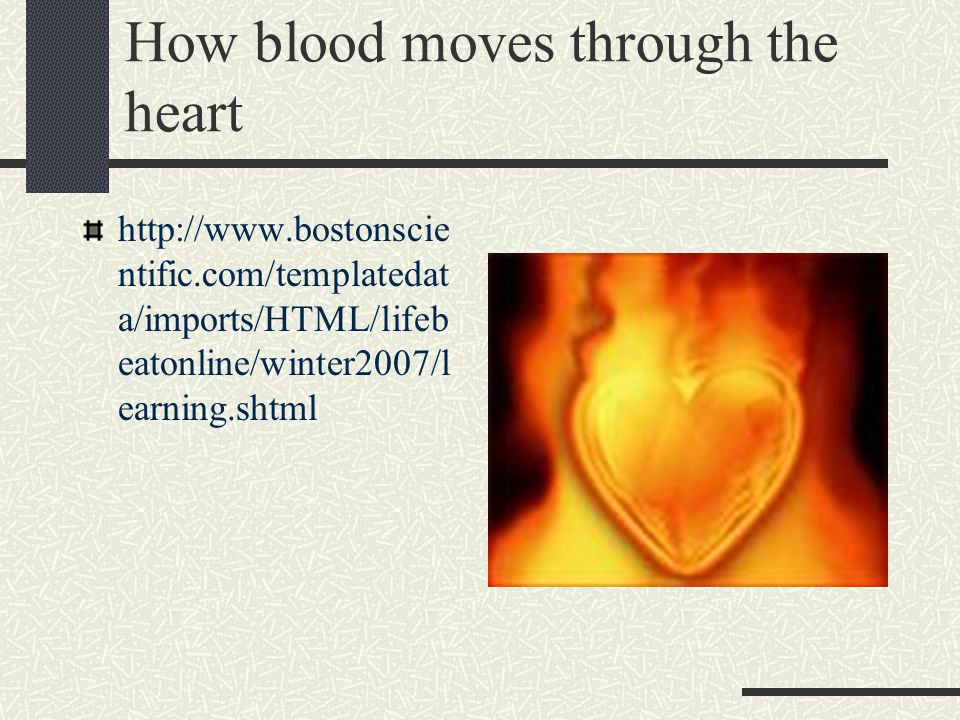 How blood moves through the heart http://www.bostonscie ntific.com/templatedat a/imports/HTML/lifeb eatonline/winter2007/l earning.shtml
