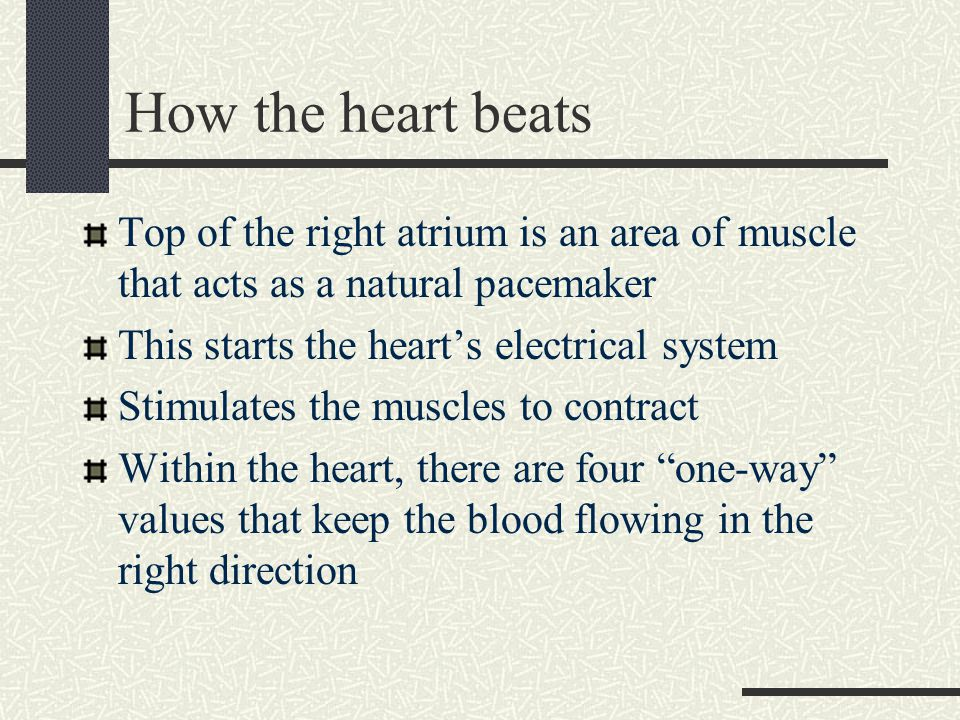 How the heart beats Top of the right atrium is an area of muscle that acts as a natural pacemaker This starts the heart's electrical system Stimulates