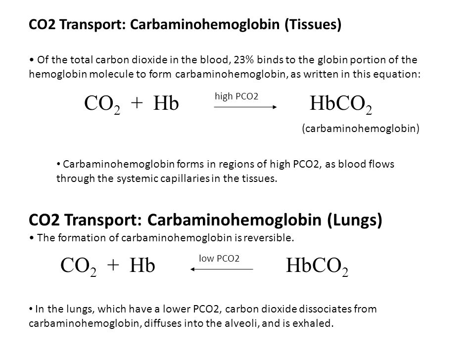 CO 2 + HbHbCO 2 CO2 Transport: Carbaminohemoglobin (Tissues) Of the total carbon dioxide in the blood, 23% binds to the globin portion of the hemoglob