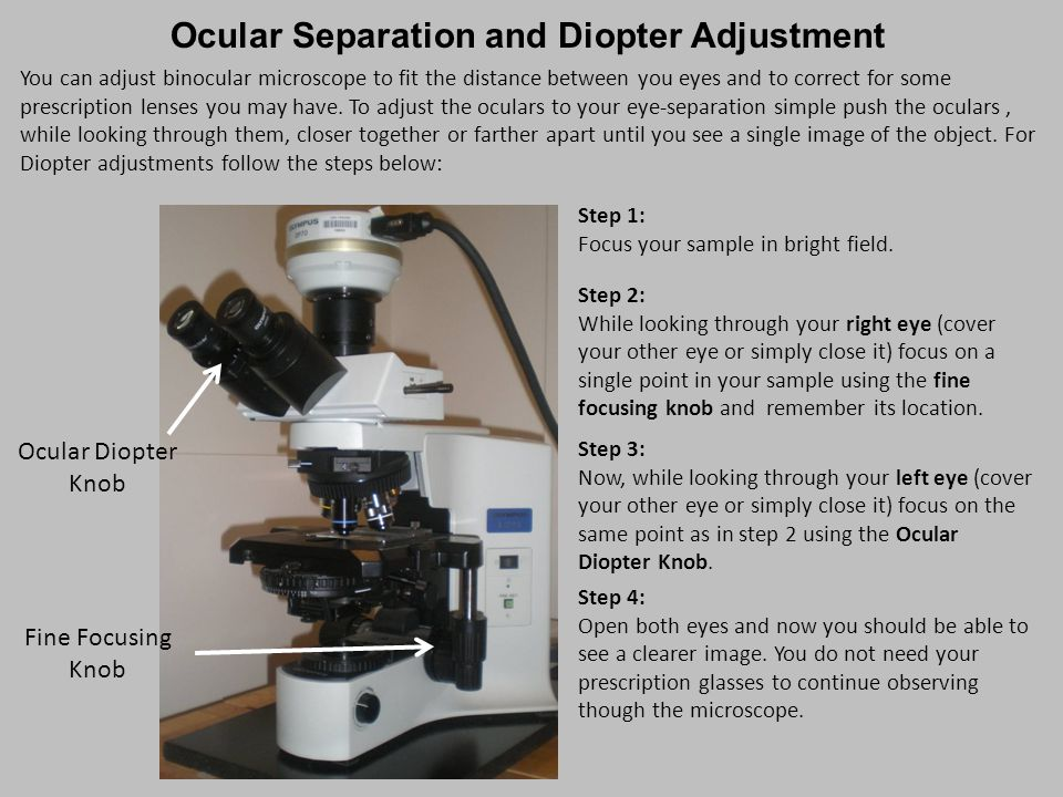 Ocular Separation and Diopter Adjustment Step 1: Focus your sample in bright field. Step 2: While looking through your right eye (cover your other eye