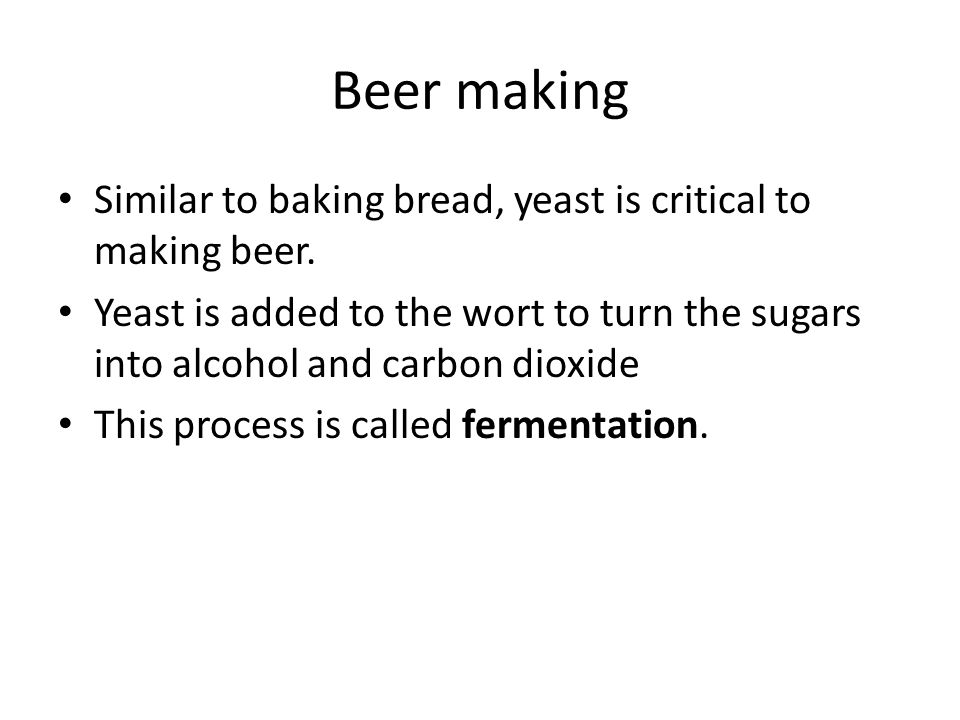 Beer making Similar to baking bread, yeast is critical to making beer. Yeast is added to the wort to turn the sugars into alcohol and carbon dioxide T