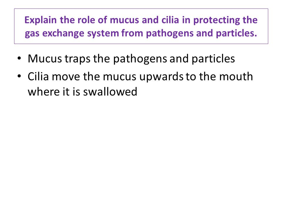 Explain the role of mucus and cilia in protecting the gas exchange system from pathogens and particles. Mucus traps the pathogens and particles Cilia