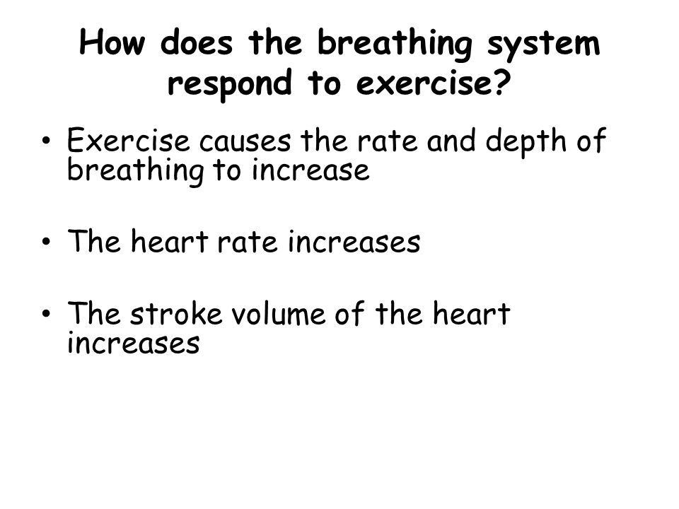 How does the breathing system respond to exercise? Exercise causes the rate and depth of breathing to increase The heart rate increases The stroke vol