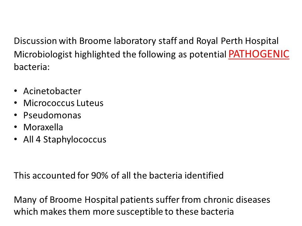 Discussion with Broome laboratory staff and Royal Perth Hospital Microbiologist highlighted the following as potential PATHOGENIC bacteria: Acinetobac
